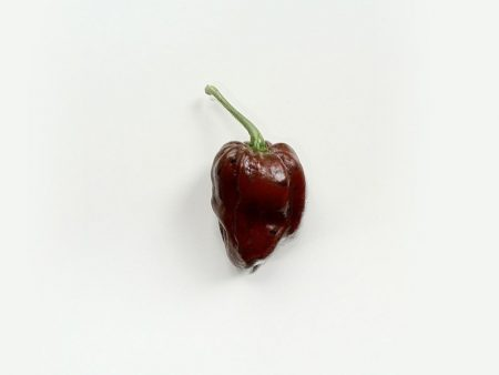chocolate-habanero